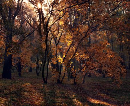 Фото Солнечный свет греет осенние деревья, Фотограф alexandrdeviant (© Radieschen), добавлено: 14.03.2012 04:32