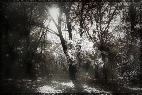 Фото В лесу идёт первый снег