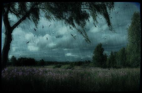 Фото Дождь в поле (© Флориссия), добавлено: 15.03.2012 13:49