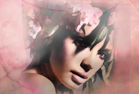 Фото Fiori-итальянский цветок (© Black hole), добавлено: 15.03.2012 17:04