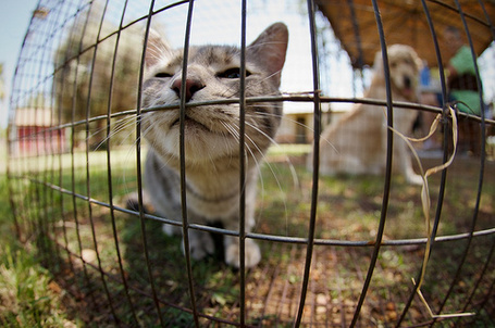 Фото Кот возле железной сетки (© Феминистка), добавлено: 16.03.2012 12:47