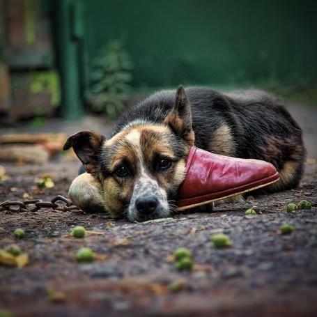 Фото Грустный пёс (© Julia_57), добавлено: 16.03.2012 21:59