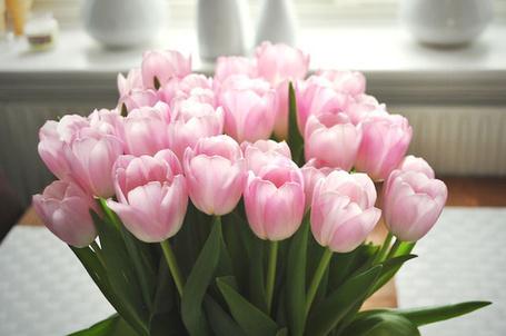 Фото Букет розовых тюльпанов (© Штушка), добавлено: 16.03.2012 22:38