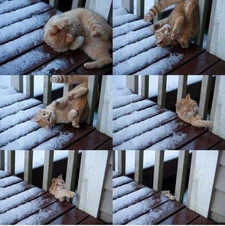 Фото Кот в разных позах
