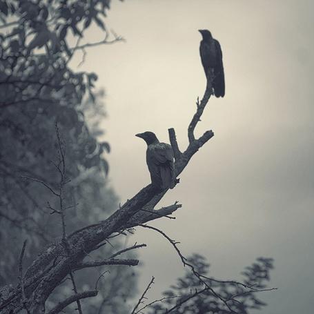 Фото Две птахи, сидящие на ветке дерева, фотограф - Nick Lisitsin