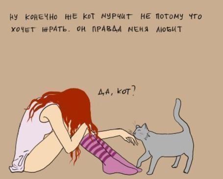 все потому что я кот а ты нет картинки того, чтобы