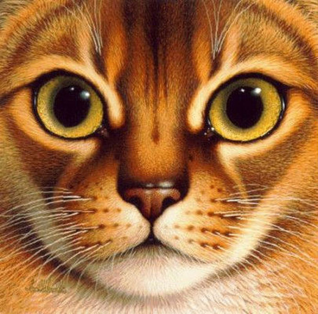 Фото Braldt Bralds. Портрет кошки (© Anatol), добавлено: 23.03.2012 01:48