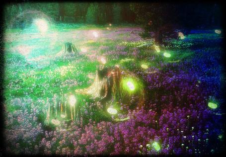 Фото Волшебная поляна