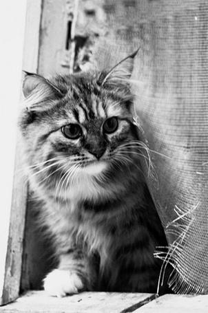 Фото Кошка, собирающаяся пойти на прогулку