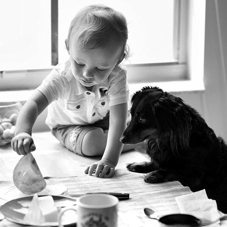 Фото Маленький ребёнок и его пёс устроили чаепитие на столе