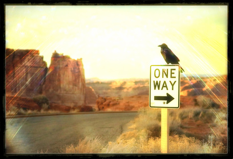 Фото Ворон сидит на дорожном знаке с надписью (one way) (© Флориссия), добавлено: 29.03.2012 13:49