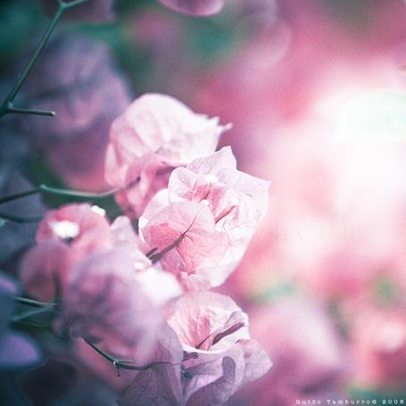 Фото Красивые цветочки, Guido Tamburro (© Radieschen), добавлено: 29.03.2012 14:36