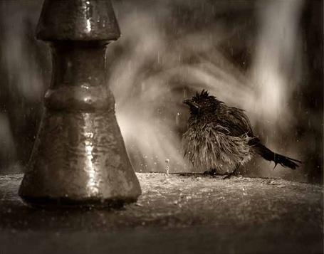 Фото Бедная промокшая птаха (© Malenkoe 4ydo), добавлено: 31.03.2012 07:18