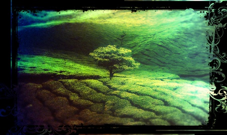 Фото Дерево в поле (© Флориссия), добавлено: 31.03.2012 11:53