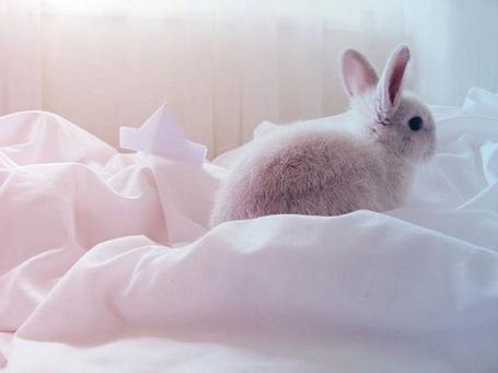 Фото Кролик на постели (© StepUp), добавлено: 02.04.2012 19:25