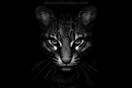 Фото Серьёзный леопард,фотограф -Alannah Hawker (© Malenkoe 4ydo), добавлено: 07.04.2012 17:21