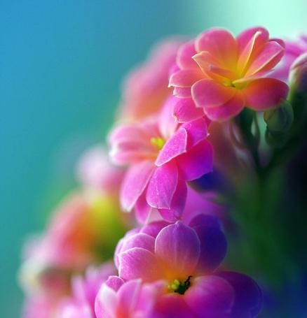 Фото Цветы (© Julia_57), добавлено: 12.04.2012 15:09