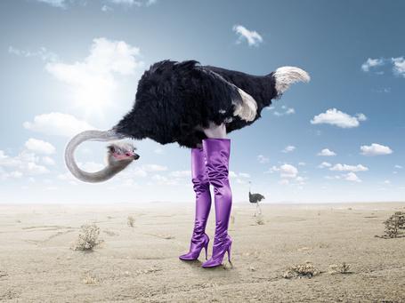 Фото Страус в длинных женских сапогах в пустыне (© Anatol), добавлено: 12.04.2012 15:11
