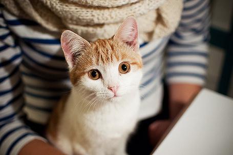 Фото Кот на коленях хозяина (© StepUp), добавлено: 12.04.2012 19:39