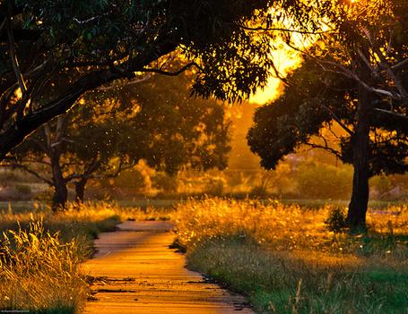 Фото Солнечная дорожка в парке (© StepUp), добавлено: 16.04.2012 18:48