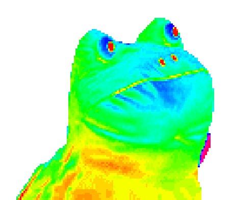 Фото Переливающаяся всеми цветами жаба (© BRODJaGA), добавлено: 18.04.2012 19:36