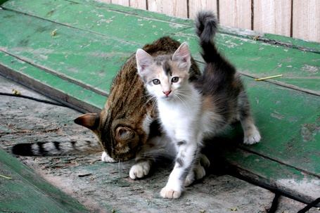 Фото Кошка с котёнком (© Volkodavsha), добавлено: 22.04.2012 11:47