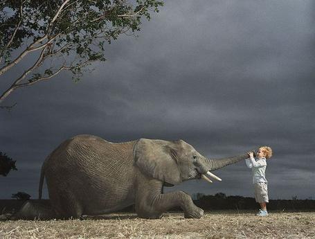 Фото Соседи по планете. Слон и маленький мальчик
