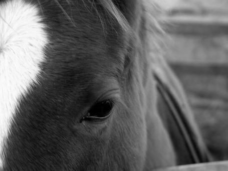 Фото Взгляд лошадки