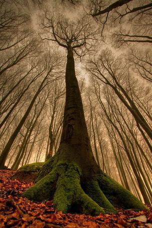Фото Дерево, покрытое мхом, вид снизу (© ВалерияВалердинова), добавлено: 24.04.2012 18:37