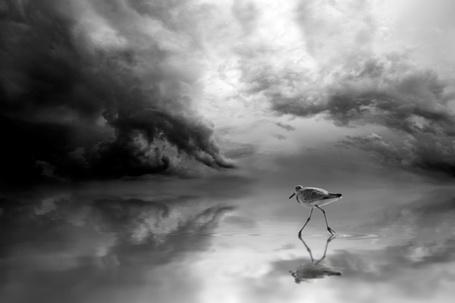 Фото Птичка, уходящая в заоблачные дали (© Malenkoe 4ydo), добавлено: 25.04.2012 10:46