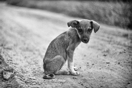 Фото Бездомный щенок (© Malenkoe 4ydo), добавлено: 26.04.2012 08:16