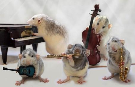Фото Мышиный оркестр, фотограф - Ellen van Deelen (© Malenkoe 4ydo), добавлено: 30.04.2012 15:02