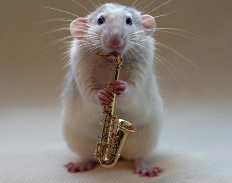 Фото Мышка с саксофоном в лапках, фотограф - Ellen van Deelen (© Malenkoe 4ydo), добавлено: 30.04.2012 15:04