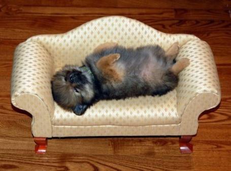 Фото Маленький щенок сладко спит в маленьком диване (© Кофе мой друг), добавлено: 30.04.2012 20:23
