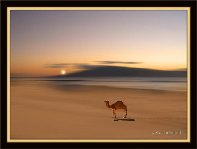 Фото Верблюд в пустыне на фоне заходящего солнца. Фотограф Питер Холм ( Peter Holme III)