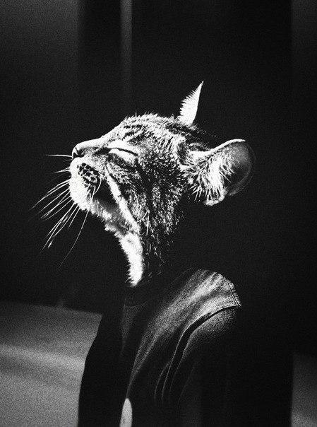 С головой кота картинки