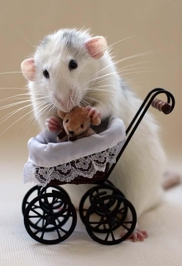 Картинка добро, картинки с мышками приколы