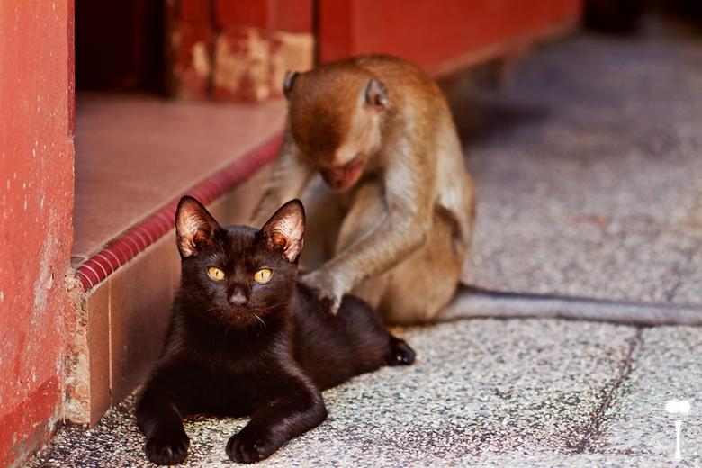 Фото Черный кот и обезьянка возле порога дома ( by Matteï )