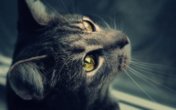 Фото Кот с красивыми яркими глазами