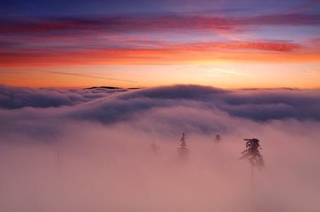Фото В тумане, автор Michal Ostrowski (© Radieschen), добавлено: 01.05.2012 13:51
