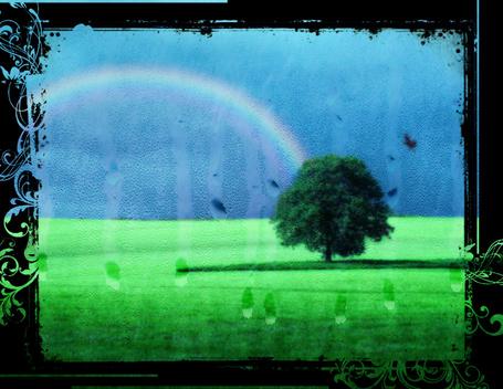 Фото Дерево под дождём в поле на фоне радуги (© Флориссия), добавлено: 01.05.2012 15:23