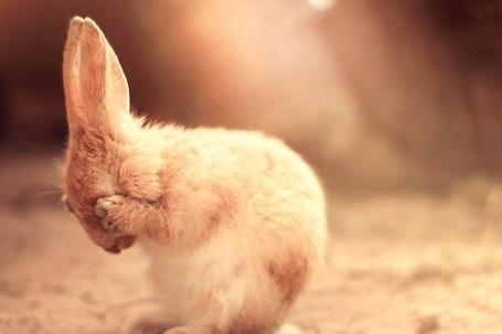 Фото Кролик сидит, закрыв лапками глаза (© Кофе мой друг), добавлено: 05.05.2012 16:16