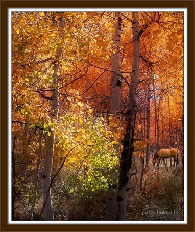 Фото Лошадь в осеннем лесу. Фотограф Питер Холм ( Peter Holme III)