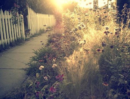 Фото Полуденное солнце освещает задворки хозяйского сада, фотограф - Rachel Bellinsky (© Malenkoe 4ydo), добавлено: 06.05.2012 08:32