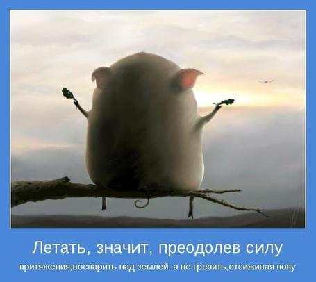 Фото ЛЕТАТЬ, ЗНАЧИТ, ПРЕОДОЛЕВ СИЛУ, притяжения, воспорить над землёй, а не грезить, отсиживая попу (© Штушка), добавлено: 07.05.2012 20:34