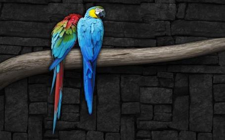 Фото Два синих попугая на ветке (© Кофе мой друг), добавлено: 07.05.2012 21:24