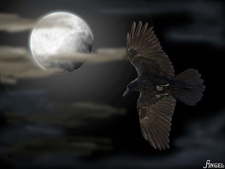 Фото Ворон летит по ночному небу в ночь полной луны (Angel) (© Флориссия), добавлено: 12.05.2012 17:14