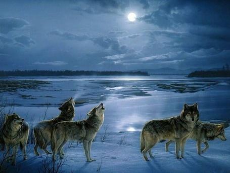 Фото Стая волков у зимнего озера (© Флориссия), добавлено: 12.05.2012 17:16