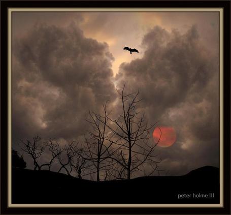 Фото Ночная птица. Фотограф Питер Холм ( Peter Holme III) (© Natko), добавлено: 16.05.2012 17:54