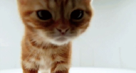 Фото Маленький котёнок вглядывает